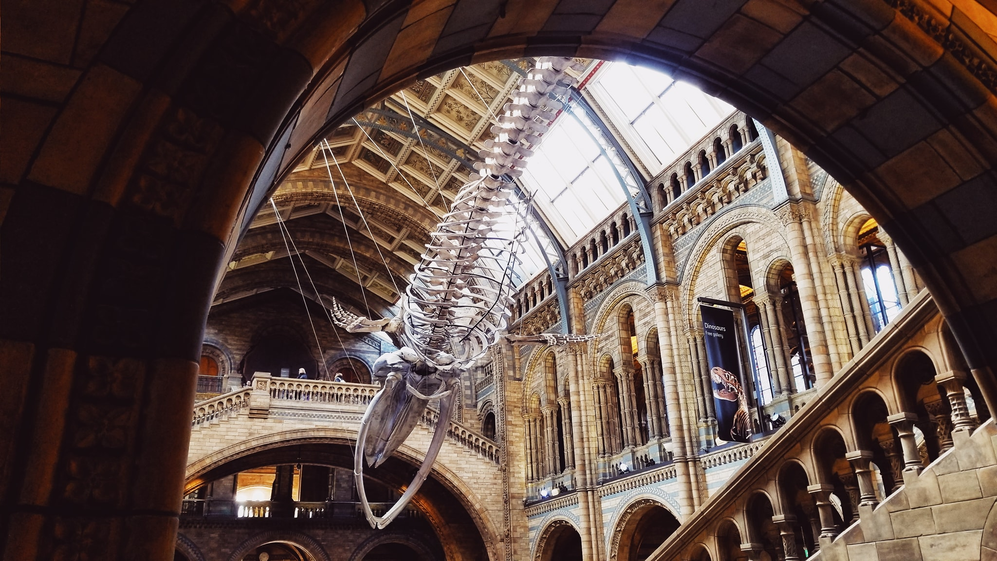 london national history museum